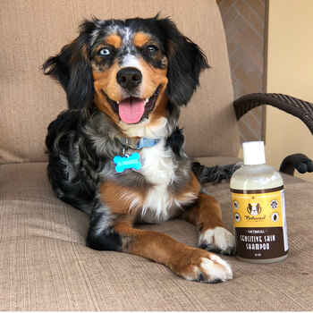 Natural Dog Company Sensitive Skin Oatmeal Shampoo