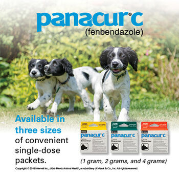Panacur C Canine Dewormer Three 4 Gram Packages