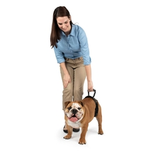 Rear Dog Lifting Harness-product-tile