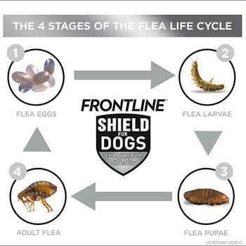 Frontline Shield