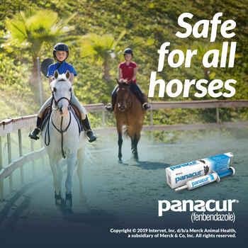 Panacur Paste Equine Dewormer