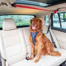 PetSafe PupZip Vehicle Zipline-product-tile