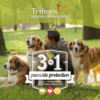 Trifexis 6pk Dog 40.1-60 lbs