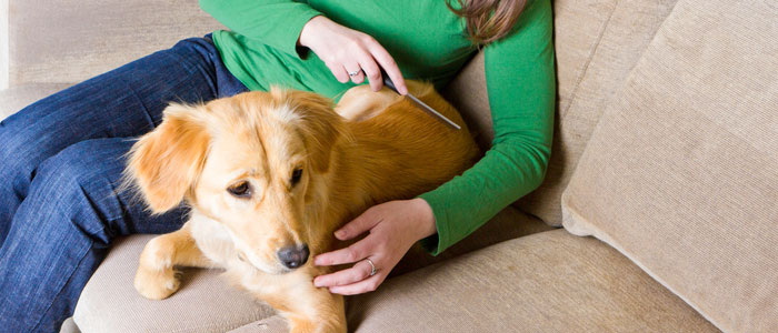 Using a flea comb helps to remove biting fleas off your dog or cat