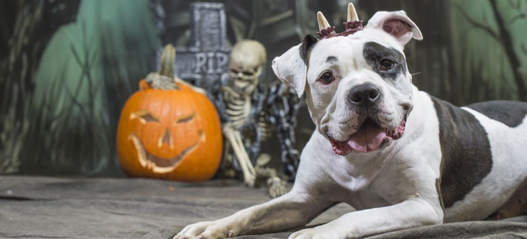 Halloween can be a fun time for you and your pet - just remember these safety tips!