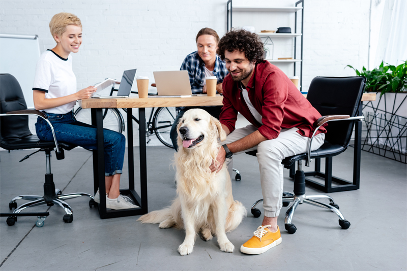 Cute dog in office workspace