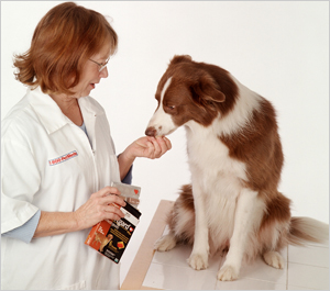 Pet Meds sells top selling pet medicines but for less