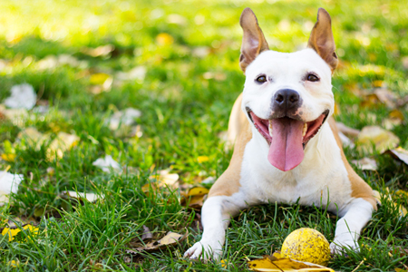 Adding a Fish Oil or Omega 3 supplement to your pet's diet can help promote healthy skin, coat, and brain function