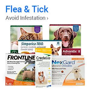Avoid Infestation