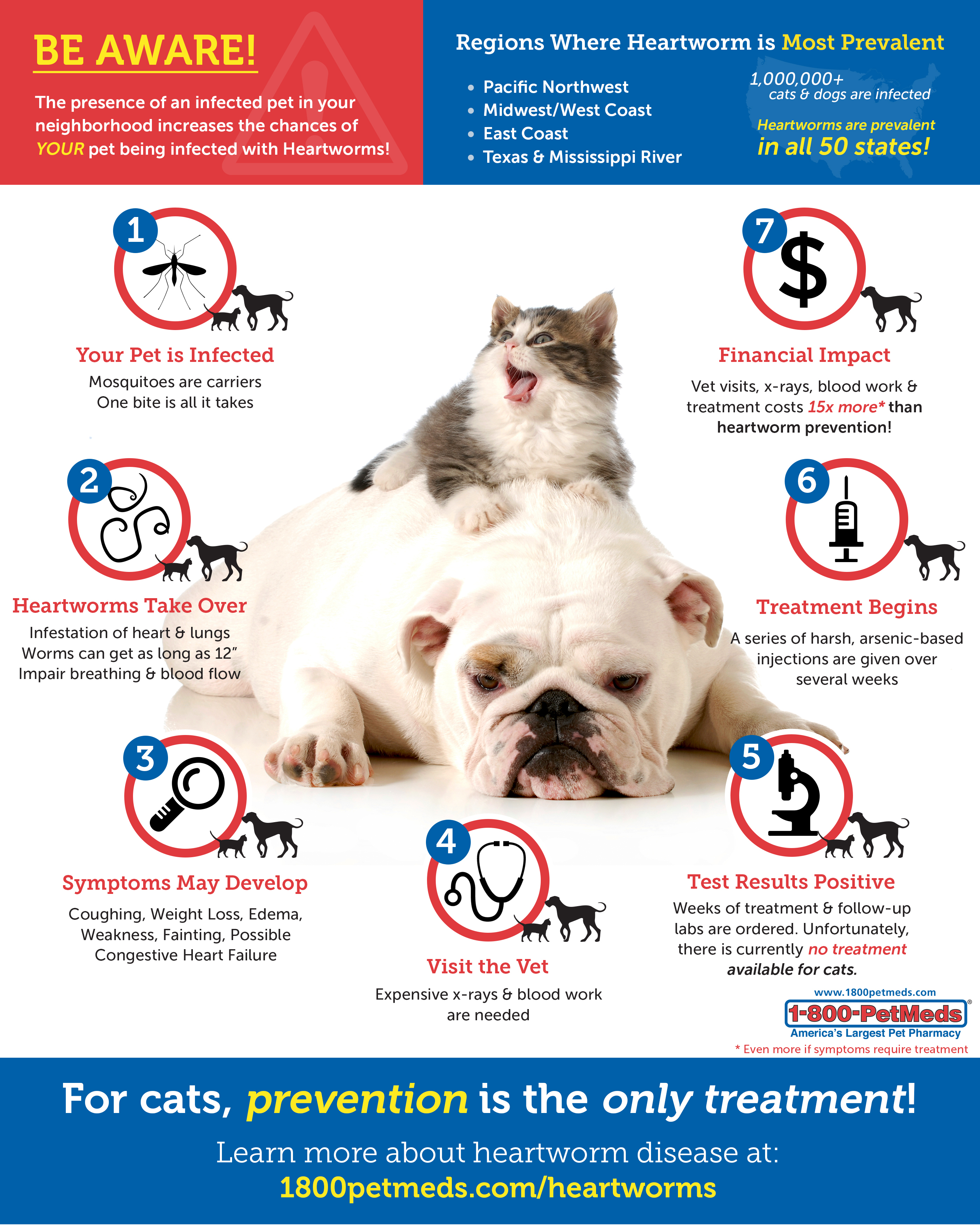 Heartworm rates of infection