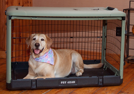 The Super Dog Crate with Cozy Bed Usage