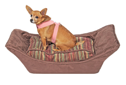 Toy Dog Sleigh Bed Usage
