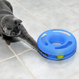 Crazy Circle Interactive Cat Toy Usage
