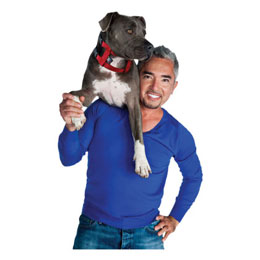 Cesar Millan Illusion Dog Collar & Leash System Usage