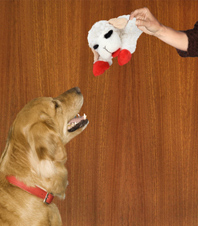 Lamb Chop Dog Toy Usage